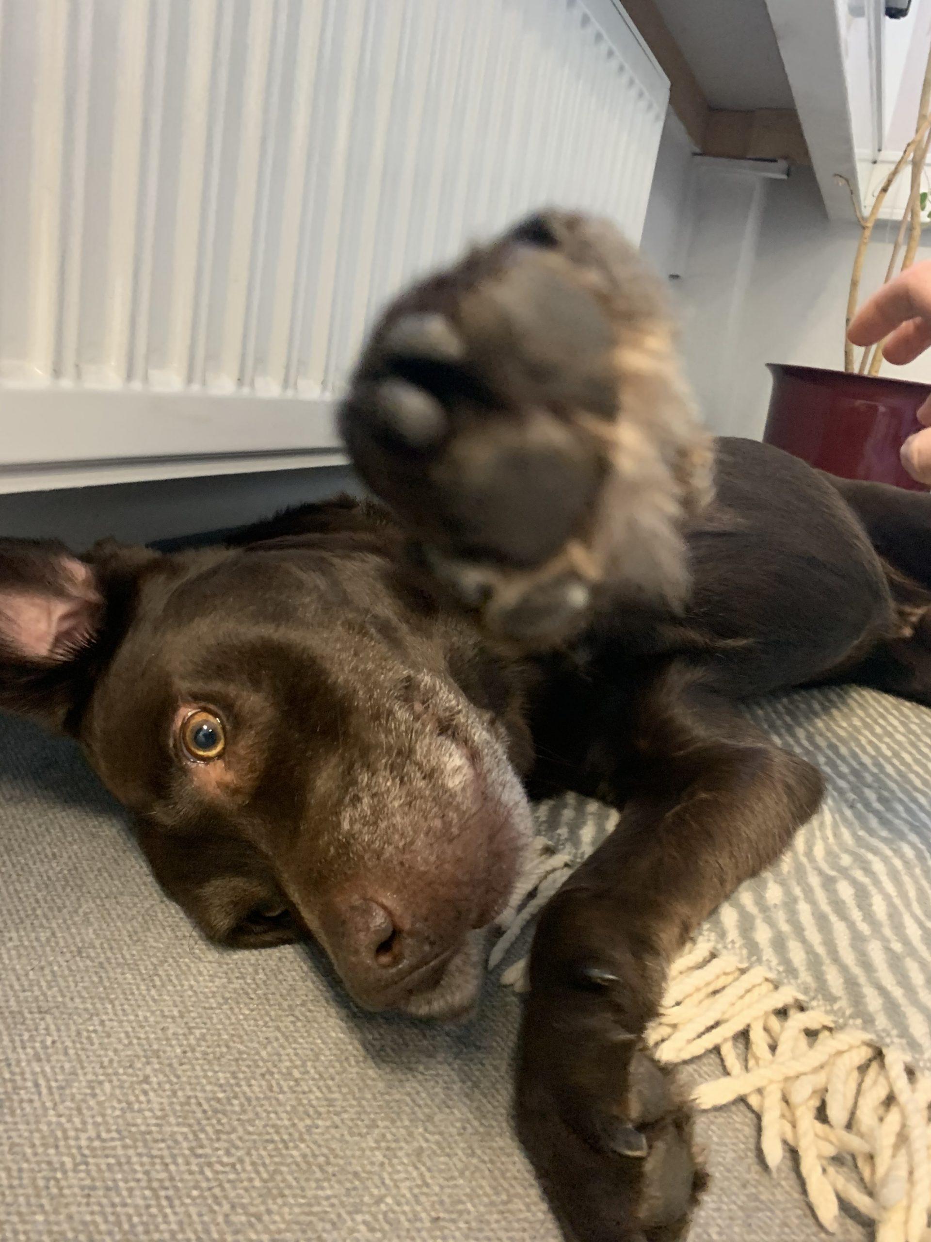 Unser Büro Hund Cooper